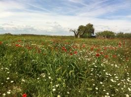 Oportunitats entre l'Urgell i la Segarra