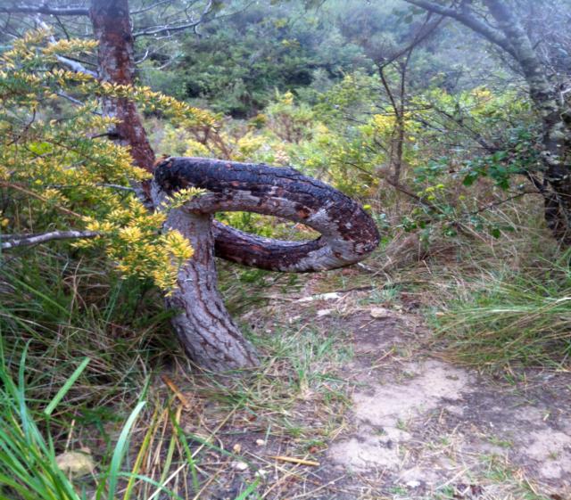 arbre tort
